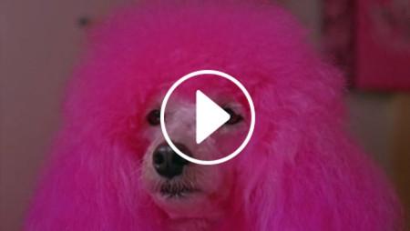 Julio Bashmore e il videoclip che ti cambierà la giornata